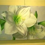Amaryllis blancs.