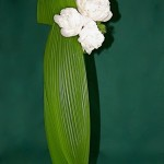 Deux feuilles entières habillent le grand vase en vere.