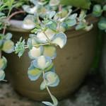 Sur le perron de la maison, une collection de plantes en pots.