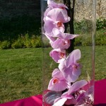 Cocktail dans le parc de la grange : orchidées phalaenopsis roses sur nappe de buffet rose framboise.