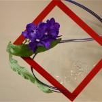 Branche d'orchidée Vanda rotshildiana présentée dans un cadre de couleur . Exposition Floramy mai 2009 à Nantes-Bouguenais.