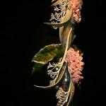 Jeux de vases irisés, branches de Phalaenopsis, feuilles d'anthuriums et cocotier.  Auditeurs du Luxembourg, Paris