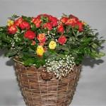 Oeufs et poussins sont symboles du renouveau des fêtes de Pâques.