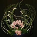 Artemis ou Diane: les volutes de steel grass sont l'arc pour la chasse. Accompagnées d'arums, d'orchidées phalaenopsis et de feuilles d'aspidistra.