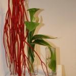 Transparence: mitsumata velours, arums et feuilles de cordyline.