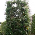 Jean-Philippe Poirée-Ville: Elévation. Tour végétale en lignes de cordes végétalisées. L'une forme des spirales de fleurs qui montent vers le ciel. L'autre, des boucles de (mauvaises!) herbes qui tombent. L'oeuvre est évolutive.