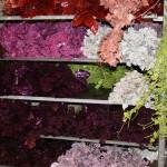 Nöel peut se décliner dans toutes les couleurs : étalage d'un grossiste à Rungis en décembre.