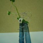 Les tiges des anémones s'échappent des bouteilles bleues.