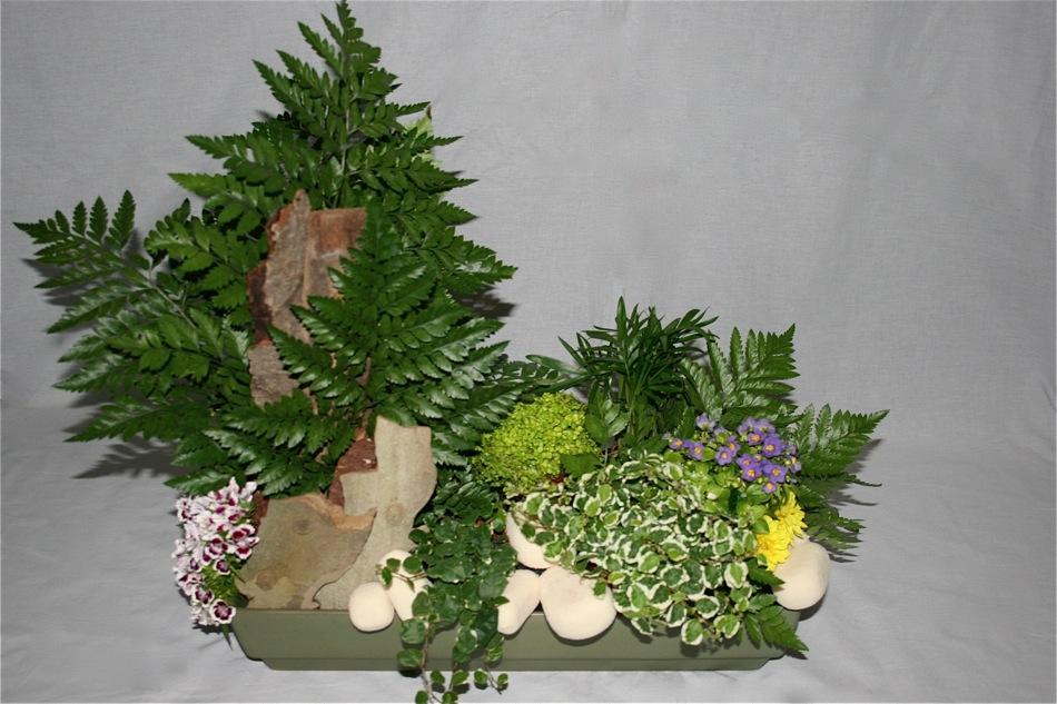 Jardin de foug res inspirations florales for Achat plantes vertes