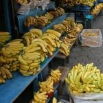 La banane occupe une place de choix en Equateur.Le pays est le premier exportateur de bananes au monde.On peut y voir toutes sortes de bananes consommées en légume ou en fruit.