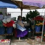 Couleurs du marché aux fleurs de Cuenca devant l'église El Carmen de la Asuncion.C'est à Cuenca que l'on fabrique les Panamas, célèbres chapeaux,avec les frondes fibreuses d'un palmier qui pousse en Equateur.