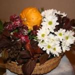 La couleur  pourpre du feuillage de framboisier est éclairée par le blanc des fleurs de chrysanthèmes.