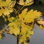 Magie des couleurs de l'automne au fil de l'eau.