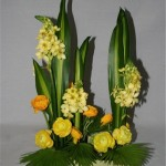 Harmonie de verts et jaunes : Ornithogallums et renoncules.