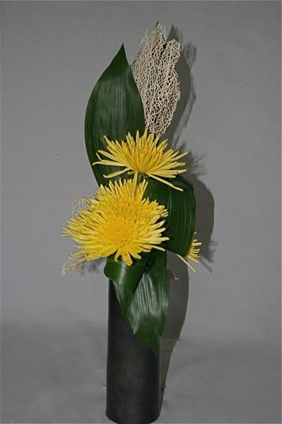 L'aspect échevelé des chrysanthèmes contraste avec les feuilles pleines et lisses.