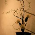 Dans ce bouquet de style ikebana,les bourgeons de saule donnent vie aux branches, protéas jaunes.
