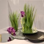 Jardin japonais, Monaco 2012. Jeux de miroirs avec des iris, fleurs et feuillage.