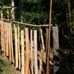 Leur croissance est rès rapide. Les tiges de bambous ou chaumes, sont  creuses.