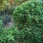 Certaines variétés de bambous sont utilisées comme gazon, d'autres mesurent jusqu'à 40 mètres de haut.