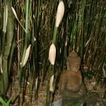 Les tiges du bambou présentent une grande diversité de couleurs et d'ornementation.