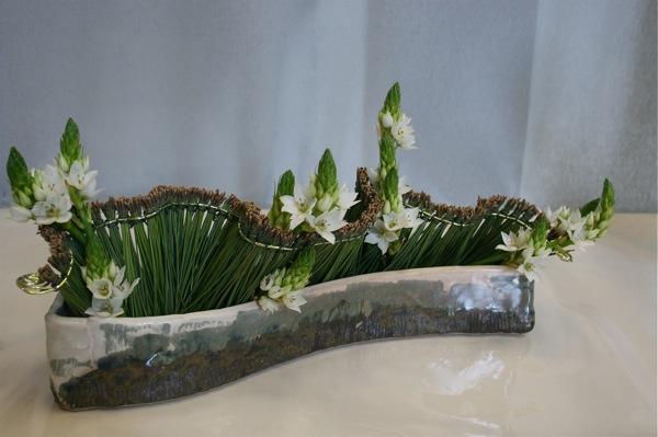 Un lien précieux court le long des aiguilles de pin groupées et les ornithogalles dressent leurs thyrses.