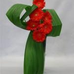 Le rouge des germinis est mis en valeur par le jeu de feuilles vert acide.