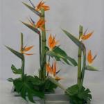 Déclinaison exotique des lignes de polygonums avec stelitzias et feuilles de monsteras.