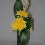 La ligne verticale de feuilles d'aspidistra est animée de chrysanthèmes Tokyo jaunes géants.