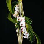 Sur un support de bambou découpé en lanières, un jeu de palmes de cycas et phalaenopsis.