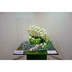 Jardin de printemps avec germinis, tulipes et anthuriums blancs, petits cubes de mousse florale verte.