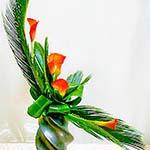 Cycas revoluta  et arums sur un vase noir très décoratif.