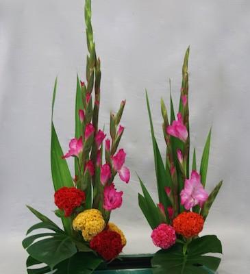 Célosies Cristata et glaïeuls sont des végétaux typiques de l'automne.