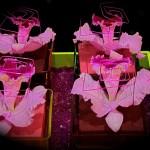 Présentation de cattleya, somptueuse orchidée originaire des zones montagneuses de l'Amérique tropicale.
