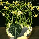 Galets oasis dans vase en verre garni d'ornithogallums.