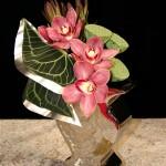 Cymbidium lotus feuille d'anthurium