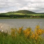 A deux pas de Langogne, le lac de Naussac crée recemment n'existait pas du temps de Stevenson. Au premier plan le genêt purgatif qui s'étale sur de nombreux versants sud de la haute vallée.