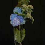 Hortensias bleus sur vase en verre, feuilles d'Alocasia et Trachélium blanc.