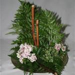 Oeillets de poète et un pot de ficus pumila  avec les fougères pour un décor de sous bois.