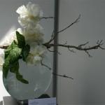 La pivoine herbacée était cultivée dès le Moyen âge dans les jardins et servait de médicament.