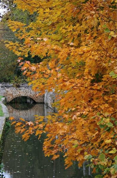 inspirations florales-automne-rivière-yvette