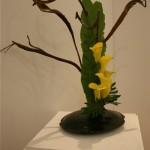 Saule Sekka, fougère Asplenium et callas jaunes. Végétaux et contenant forment un tout. Catherine Pelanjon