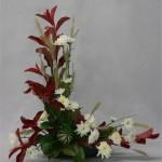 Les lignes de photinia rouge sont doublées de chrysanthèmes blancs et de graminées.