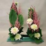 Les premiers dahlias de l'été fleurissent les lignes de Cordylines et Astilbes.