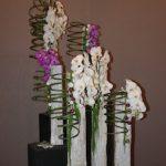 Spirales de presles et  orchidées sur des troncs expriment la forêt de Brocéliande,J.Goisbeau.